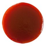 СОУС ПРИ ВАН, , 2,29 руб., Кисло-сладкий соус, , Соусы